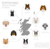 Dogs by country of origin. Scottish dog breeds. Infographic temp. Late. Vector illustration Stock Image