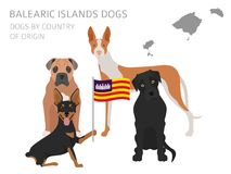 Dogs by country of origin. Spain. Balearic islands dog breeds. I Stock Photos