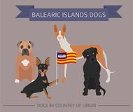 Dogs by country of origin. Spain. Balearic islands dog breeds. I Royalty Free Stock Photo