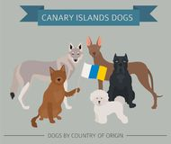Dogs by country of origin. Spain. Canary islands dog breeds. Inf Stock Photo