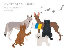 Dogs by country of origin. Spain. Canary islands dog breeds. Inf Royalty Free Stock Photo