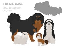 Dogs by country of origin. Tibetan dog breeds, chinese mountain. Dogs. Infographic template. Vector illustration Royalty Free Stock Image