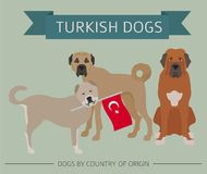 Dogs by country of origin. Turkish dog breeds. Infographic templ. Ate. Vector illustration Royalty Free Stock Photos