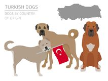 Dogs by country of origin. Turkish dog breeds. Infographic templ. Ate. Vector illustration Royalty Free Stock Images