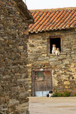 Dogs couple and another window in the front door Royalty Free Stock Image