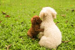 Lovely Dog couples in green grass garden. Sympathy, encourage with each other like People Stock Photos