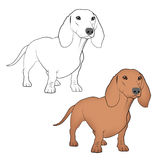 Dogs - Dachshunds Royalty Free Stock Photos