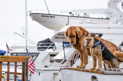 Dogs on deck of boat Stock Photo