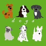 Dogs of different breeds Stock Image
