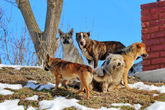 Dogs. Different breeds of street dogs stock images