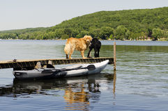 Two Dogs on the Dock Royalty Free Stock Photography