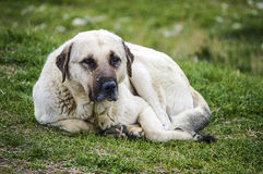 Dogs, dogs, dogs, portrait dogs pictures, dogs in different breeds, lying dogs, playing dogs, sleeping dogs pictures, interesting. And beautiful dogs pictures royalty free stock photo