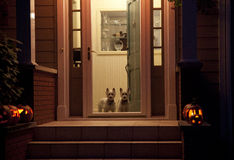 Dogs at the door Royalty Free Stock Photos