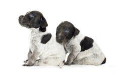 Dogs drakter Stock Photo