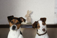 Dogs & Easter Royalty Free Stock Photos