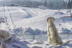 Dogs enjoy looking at the sky slope Stock Photos