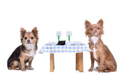 Dogs enjoying their meal Royalty Free Stock Photography