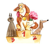 Dogs exhibition podium Royalty Free Stock Photography