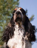 Dogs exposition Stock Photography