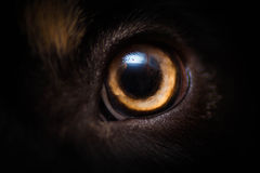 Dogs eye Stock Photography