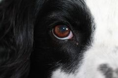 Dogs eye view royalty free stock images