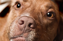 Dogs Face Stock Photos