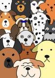 Dogs face collection Stock Photos
