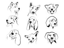 Dogs faces Stock Photography