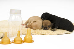 Dogs family. Three small puppies to sleep comfortably Royalty Free Stock Image
