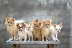 Dogs family Stock Image