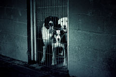 Dogs with fear Royalty Free Stock Images