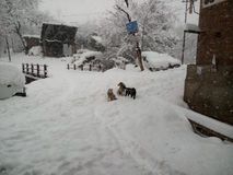 Dogs feel coldness in falling snow. Dogs are sitting outside in falling snow royalty free stock photos