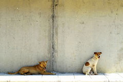 2 dogs feeling hot. 2 dogs are feeling hot royalty free stock photos