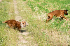 Dogs while fighting on the grass Royalty Free Stock Photography