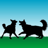 Dogs fighting or playing outdoors Stock Images
