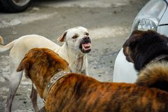 Dogs are fighting with two dogs royalty free stock photos
