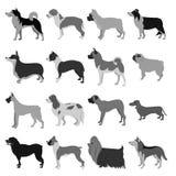Dogs flat set Royalty Free Stock Photos