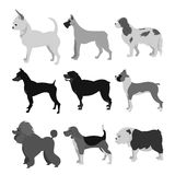 Dogs flat set Royalty Free Stock Images