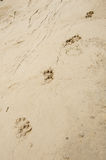 Dogs footprints Royalty Free Stock Photography
