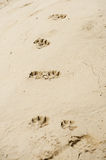Dogs footprints Royalty Free Stock Photo