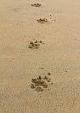 dogs fotspår Arkivfoton