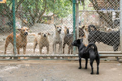 Dogs in Foundation Stock Image