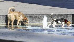 Dogs in the fountain in Belgrade. Royalty Free Stock Photos
