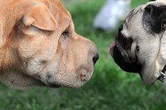Dogs friendly meeting at the dog show Stock Images