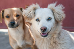 Dogs friends Royalty Free Stock Photography