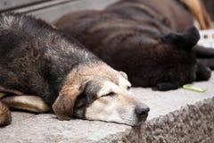 dogs gatan Royaltyfria Foton