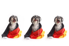 Dogs with German flag shout in front of white background Stock Photo