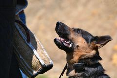 Dogs 135 Stock Images