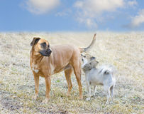 Dogs Getting Acquainted Royalty Free Stock Images