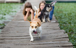 Dogs and girls on wooden dock Royalty Free Stock Photography